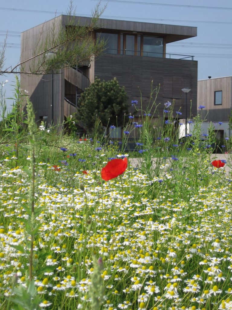 Foto beplanting Rieteiland Oost